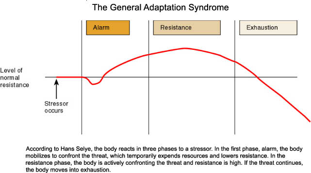 the general adaptation syndrome General adaptation syndrome (gas) is the predictable way the body responds to stress as described by hans selye (1907-1982) learn more about the three stages of general adaptation syndrome and test your knowledge with quiz questions.